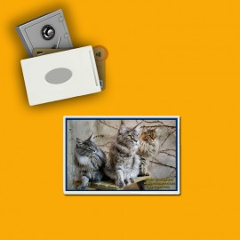 RFID shielded single card holder image cats